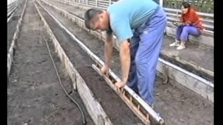 Овощеводство по Миттлайдеру 10 - Выращивание помидор(Знаете ли вы, какому довольно известному овощу принадлежит название