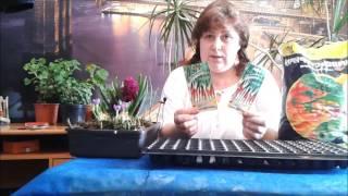 Лук Рецепт выращивания  Эксибишен  Лук-порей. Моя энциклопедия