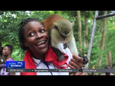 Tafi Atome villagers in Ghana profit from monkey business