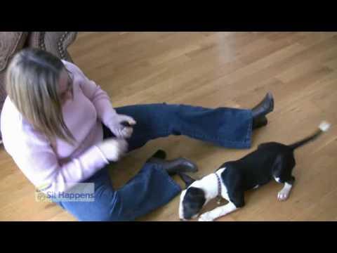 Sit Happens Dog Training & Behavior Introduction