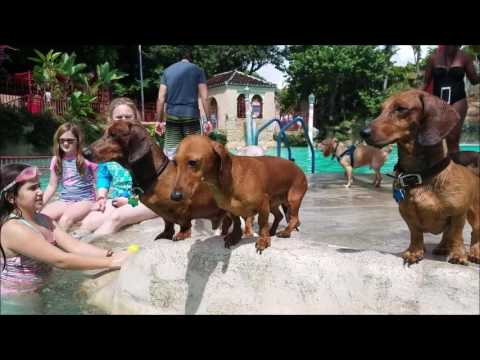 Paws in the pool 2016  - Venetian Pool - Coral Gables