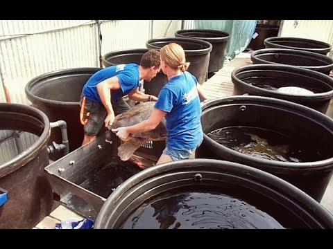 ARCHELON, Sea Turtle Rescue Centre in Greece - Архелон ...