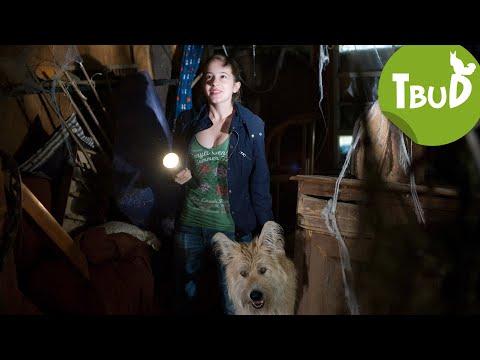 Vampire (Folge 26)   Tiere bis unters Dach   SWR Kindernetz
