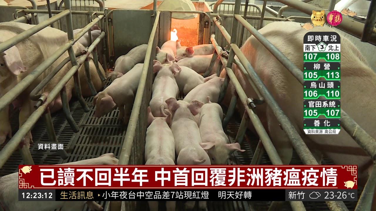 已讀不回半年 中首回覆非洲豬瘟疫情   華視新聞 20190203 - YouTube