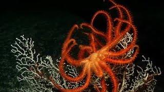 Undersea Volcanoes | Planet Earth | BBC