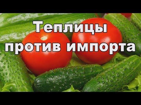 Овощи наши. Импортозамещение