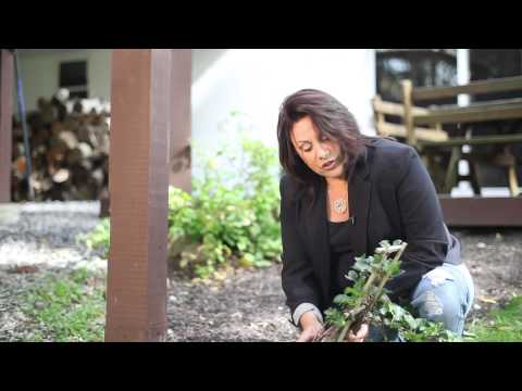 How to Transplant Climbing Hydrangea : Beautiful Garden Landscaping