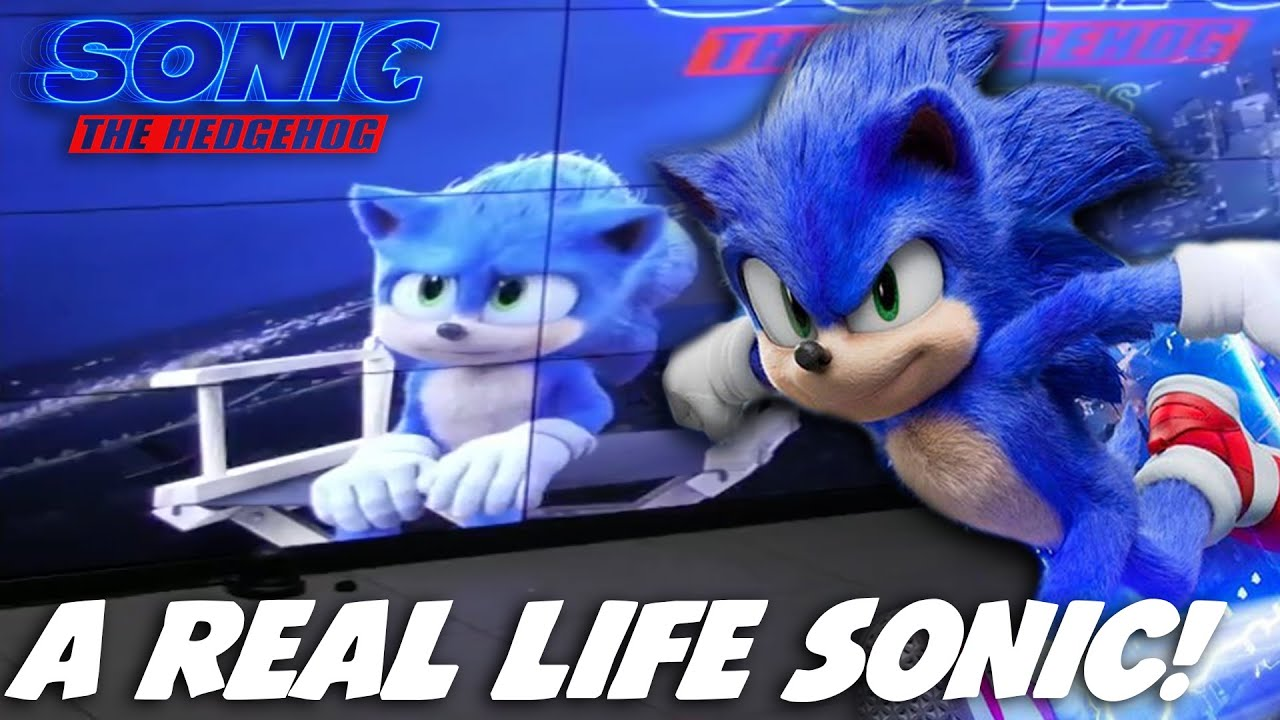 New A Real Life Sonic To Talk To Sonic Movie News Youtube