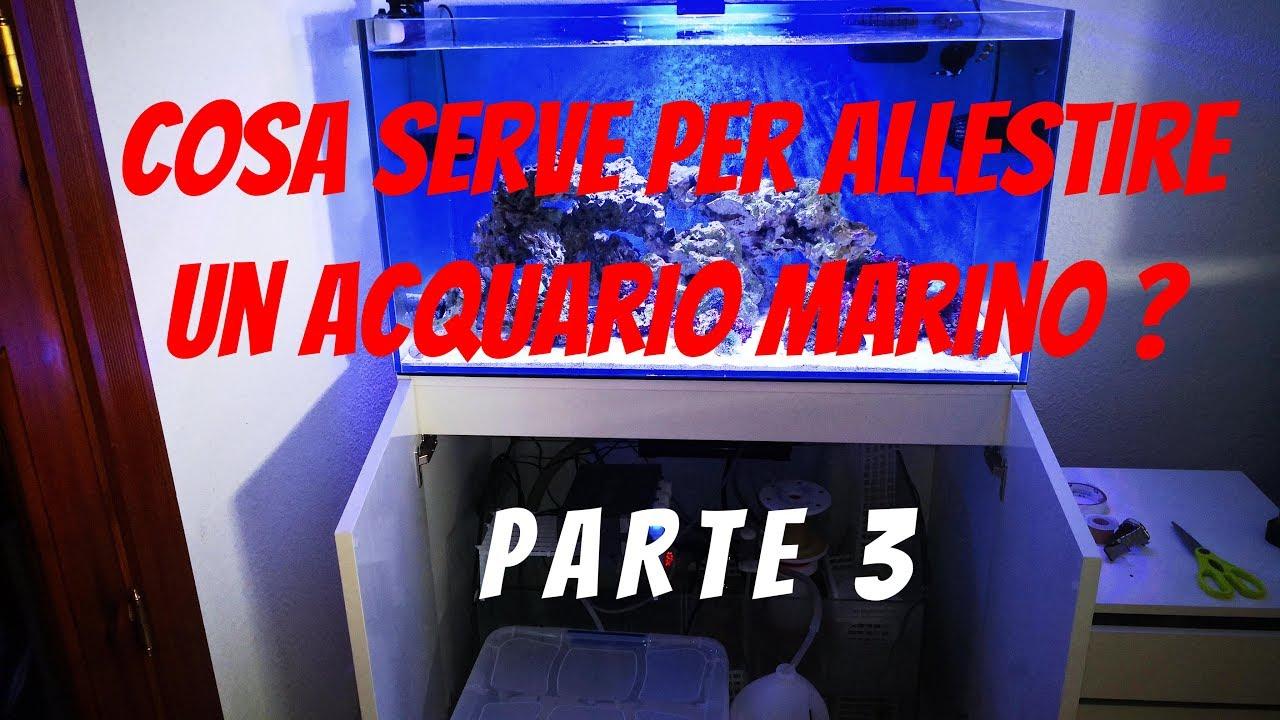 Come allestire un acquario marino - AcquariofiliaItalia.it