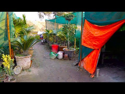 710# Lahore Nursery Visit | Indoor and Outdoor Plant With Price (Urdu/hindi)