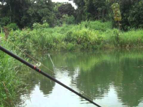 Siamfishing Jump Frog