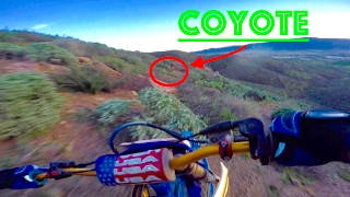 CHASING COYOTES ON DIRTBIKES (FAIL)