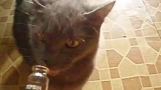"""Кот любит """"Котэрвин""""\Cat likes his medicine"""