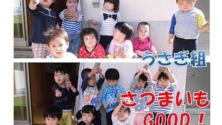 八幡保育園(福井市)うさぎ組(1歳児)がサツマイモ堀にチャレンジ!型抜...