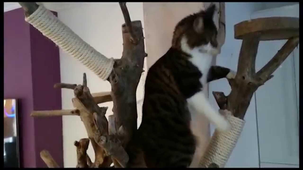 DIY Homemade Real Tree Wood Indoor Cat Tree  YouTube
