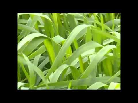 Разный урожай - YouTube