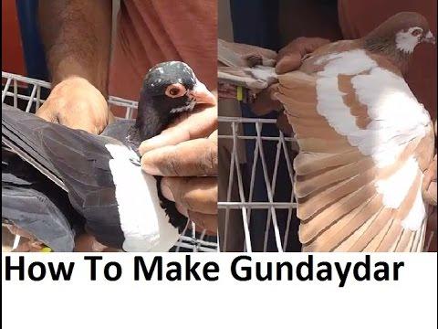 Sukkur Racing Pigeons tukri wale kabootar by Atiq Rajput