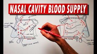 Anatomy Tutorial | Nasal Cavity Blood Supply