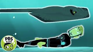 Wild Kratts: The Mysterious Stingray thumbnail