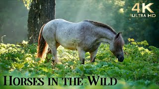 Relax with Horses in the Wild - Ambient Guitar Music - 4K Ambient TV - Relax Country Guitar