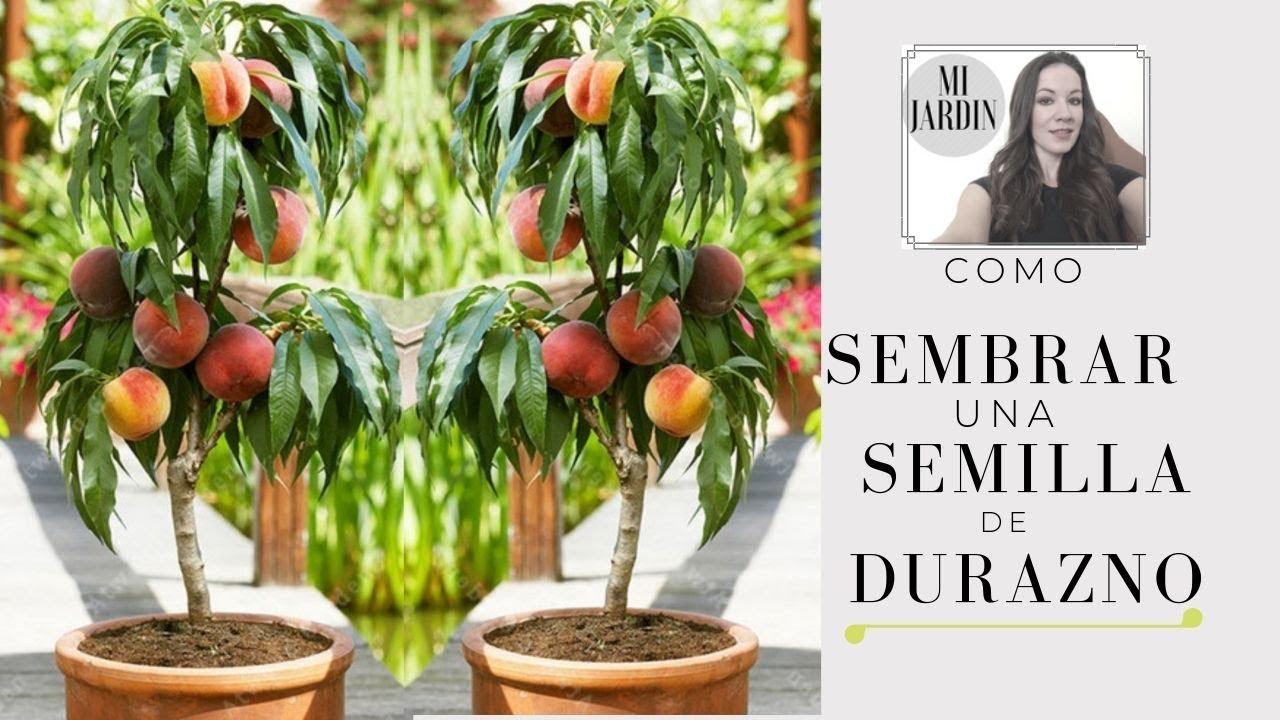 Como sembrar una semilla de durazno la manera mas for Como sembrar plantas ornamentales