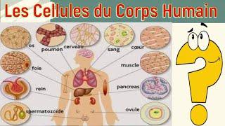 Les Cellules du Corps Humain