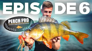 PERCH PRO 6 - Episode 6 (With Live reactions)
