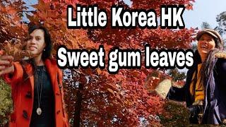 How To Go Tąi Tong Sweetgum leaves Hongkong