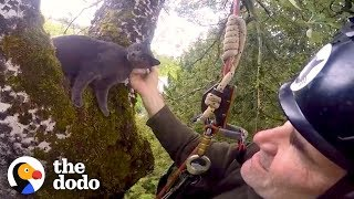Thousands of Cats have been Rescued by Climbers | The Dodo