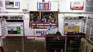 5-8-21 Top-Selling Bred Cows $1,500  Thank You R. Clower
