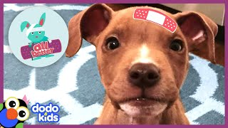 All Better Shiner — Help Tiny Puppy Grow To Be The Happiest Dog | Animal Videos For Kids | Dodo Kids