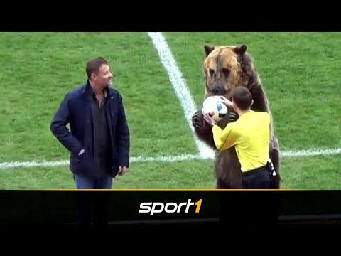 Irrsinn in Russland: Bär übergibt Schiri den Ball | SPORT1