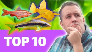 Top 10 EASY Fish That Every BEGINNER Needs