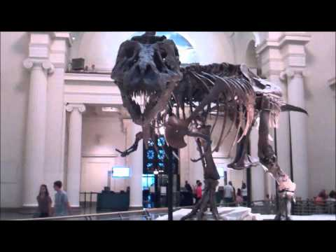 "Dinosaur fossil ""Sue"" at Chicago"