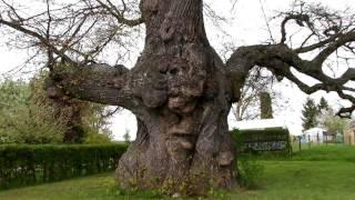 Im Quantenfeld der Bäume