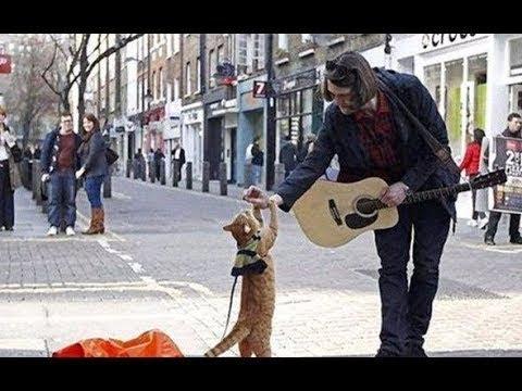 �浪汉在街头救了一�猫,没想到�从此走上人生巅峰