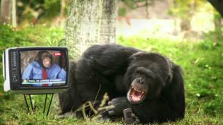 jim mobile reclame:sms als een beest (sms like a beast) funny commercial