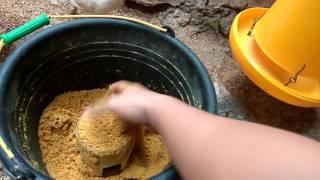 Ayam Kampung Super Cara Jitu Panen Ayam 45 hari dan Kndang Tdak Bau dgn Menggunakan EM4