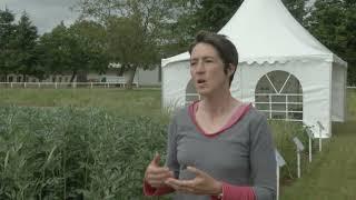 2013 - Vidéo LEGUMINEUSE - Autoproduire des protéines pour le bétail : avec quelles espèces ?