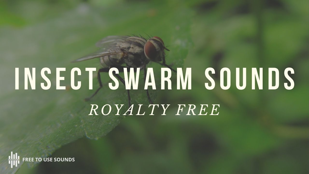 Insects & Swarms Sound Effects - Wings & Vibration - Free To Use Sounds