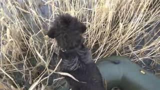 Охота в Сибири  на разливах озера Чича  23.04.2016