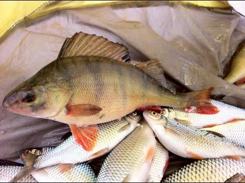 Рыбалка в Каштаке. Сорожка на мормышки.Обед в землянке. Подводные съемки!!!