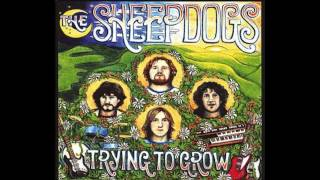 The Sheepdogs - Shine On