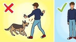 Das solltest du tun, wenn du von einem Hund angegriffen wirst!