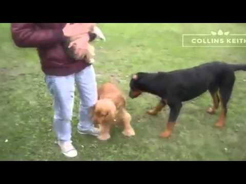 Funny Videos   Funny Cats   Funny Pranks   Funny Animals Videos   Funny Dogs 2015 #1