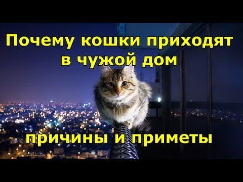 Почему кошки приходят