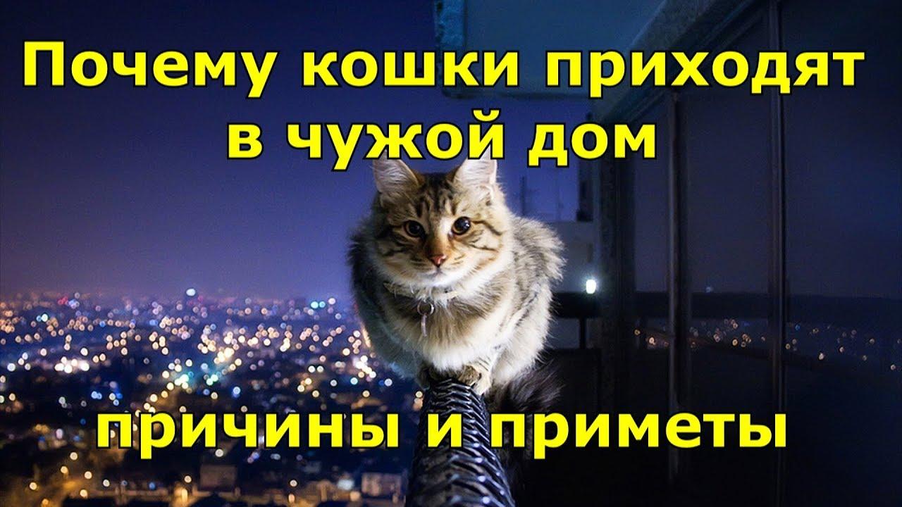 Почему кошки приходят в чужой дом. Причины и приметы.