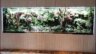 大型雨林缸,10万块也拿不下来,一棵植物就要500块,整体很壮观
