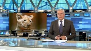 Львы мигранты заселились в Москве