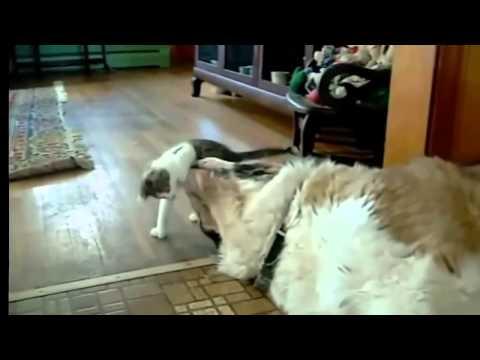 猫 オモシロ ハプニング